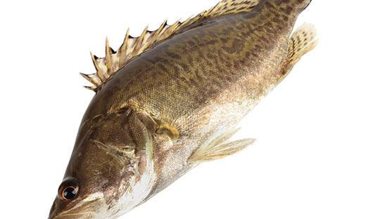 北忯炖鲈鱼,孕妇安胎好帮手
