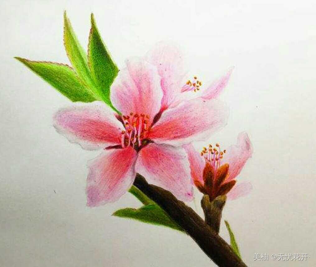 铅笔画画桃花风景